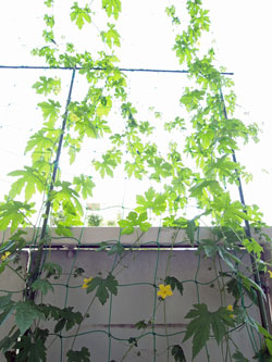 sumo_garden_0715.jpg