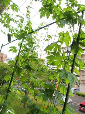 sumo_garden_0726_5.jpg