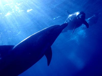 mikuara_dolphinswim.jpg