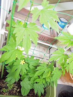 sumo_garden_0702.jpg