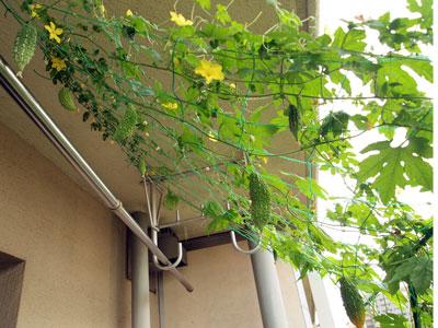 sumo_garden_0816.jpg